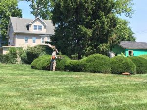 shrub trimming service baltimore county