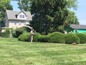 shrub trimming service baltimore county