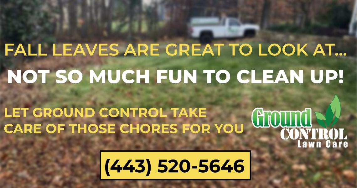 fall leaf cleanup baltimore county